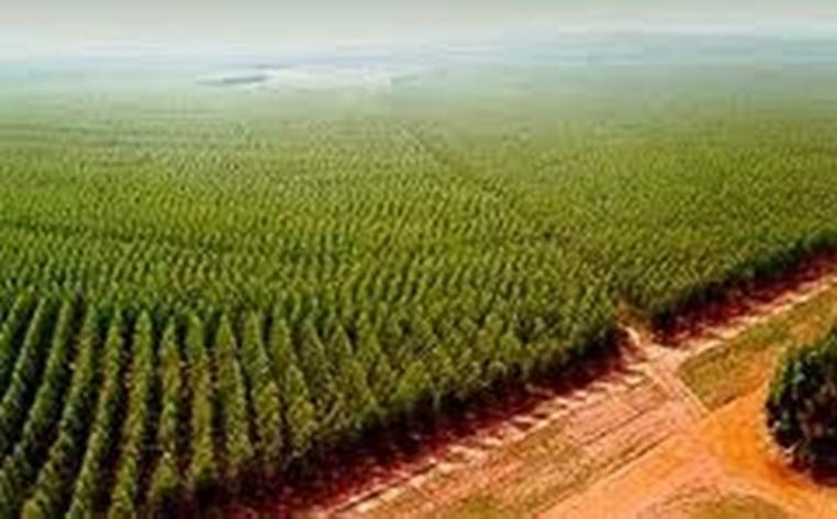 Resultado de imagen para sector forestal